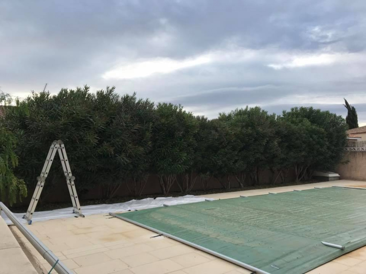 Taille de haie autour d'une piscine